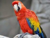 Попугай «сдал» известного бизнесмена: назвал жене имя любовницы