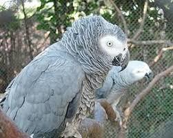 Попугаи в зоопарке ругали посетителей — птиц пришлось убрать