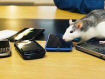 Эксперт объяснил, почему стоит вернуться к кнопочным телефонам