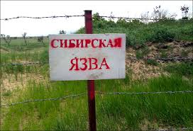 У двух жителей Ат-Башинского района выявили сибирскую язву