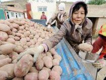 В Китае нашли рецепт борьбы с бедностью