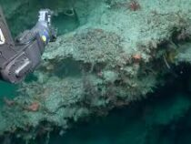 Риф-небоскреб обнаружили у берегов Австралии