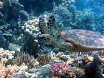 В Австралии построят «Ноев ковчег» с 800 видами разных кораллов