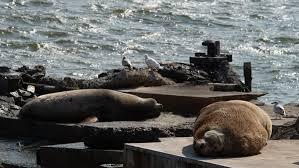 Берег Камчатки усыпало трупами морских животных