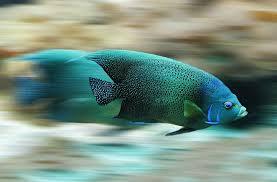Ученые, глядя на рыб, сделают самолеты более быстрыми