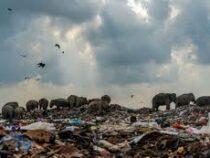 Фотография слонов на свалке выиграла конкурс в Великобритании