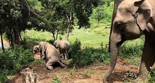 Слоны предпочитают не просто спускаться с горки, а соскальзывать по ней