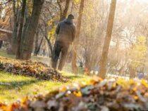 Столичные власти призывают горожан не жечь опавшие листья