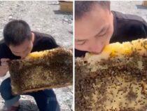 Парень, поедающий мед на пасеке в прикуску с пчелами стал героем Сети