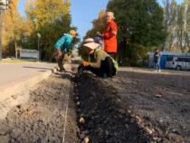 На столичных клумбах началась высадка луковиц тюльпанов