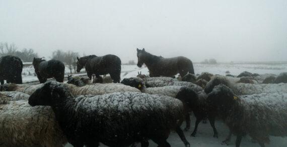 ВКыргызстане введен временный запрет навывоз скота идругих сельхозпродуктов