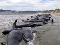 Массовая гибель дельфинов произошла в Новой Зеландии