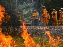 Австралийский остров Фрейзер из списка ЮНЕСКО закрыли из-за пожаров