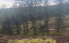 В Ирландии оползень «переместил» часть леса