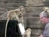 Британский пианист устроил концерт для макак в Таиланде