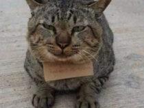 В Таиланде кот пропал на три дня и вернулся домой в долгах