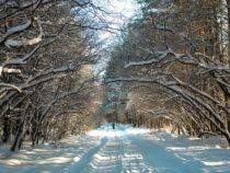 С 1 декабря в Бишкеке ожидается небольшое потепление