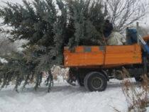 Новые елки появятся в парках Бишкека