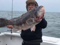 Рыболов поймал губана-таутогу рекордного размера
