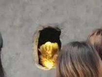 Медвежья лапа продаёт кофе через отверстие в стене