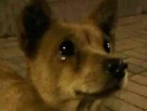 В Китае бездомный пес выпросил еду и «расплакался»