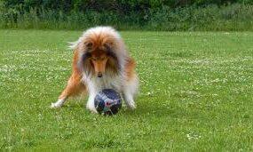 Собака выбежала на поле во время матча и на полной скорости сбила футболистку