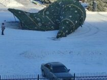 ВКараколе упала новогодняя елка