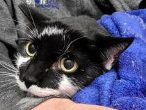Домашний кот сбежал от хозяйки и блуждал в потолке аэропорта в Нью-Йорке