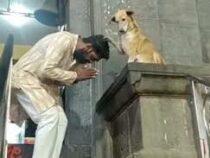 В Индии собака сидит у дверей храма и благословляет посетителей