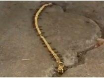 Хозяйственные муравьи утащили золотой браслет женщины