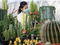 Китаянка пыталась провезти в Новую Зеландию тысячу кактусов в чулках