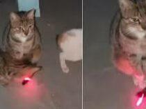 В Сети нашли «самого невозмутимого в мире» кота