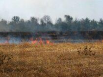 Пожар возле Токмока уничтожил больше 60гектаров лесопосадок иполей