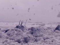 Целая ирландская деревушка покрылась толстым слоем морской пены
