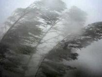 В Бишкеке и Чуйской области в ближайшие часы ожидается сильный ветер