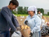 США выделили $15 млн на развитие сельского хозяйства на юге Кыргызстана