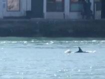 Заплывшие в каналы Венеции дельфины попали на видео