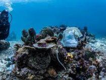 Медицинские одноразовые маски загрязнили коралловые рифы  на Филиппинах