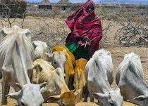 С нехваткой продовольствия в мире могут столкнуться 265 миллионов человек