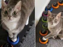 Хозяйка выяснила, что кошка выключает ее будильник