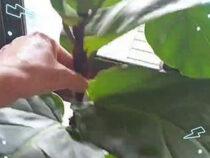 С помощью обычной встряски комнатные растения становятся крепче