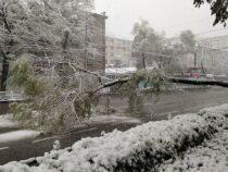 1 апреля в Бишкеке ожидается снег