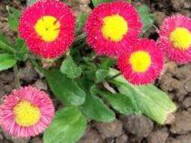 В Джалал-Абаде с 1 марта началась высадка цветов