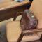 В Кыргызстане планируют сократить штат госорганов