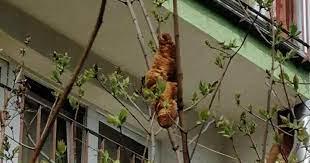 Напугавший поляков неизвестный зверь на дереве оказался круассаном