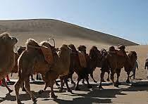 В Китае появился светофор для верблюдов в пустыне