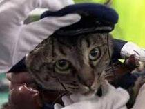 Кошку назначили главой полицейского управления японского города Тояма