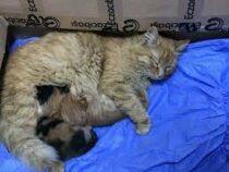 Бездомная кошка с больными котятами сама обратилась в ветклинику