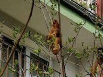 Круассан на дереве приняли за опасное животное