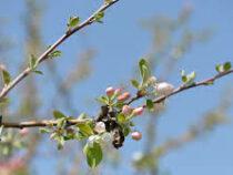 В Минсельхозе надеются, что резкое снижение температуры воздуха не отразится на урожае